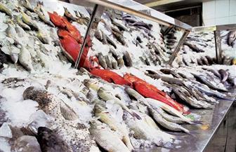 ضبط 300 كيلو أسماك مجمدة منتهية الصلاحية بالغربية