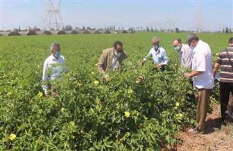 وكيل وزارة الزراعة بدمياط يكشف تفاصيل نتائج مبادرة «قطن أفضل» | صور