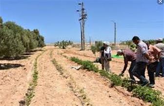 وزارة الزراعة تتابع دور محطة رأس سدر لبحوث الصحراء في خدمة أهالي سيناء