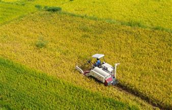 حصاد زراعي وفير في الصين رغم تتابع الكوارث الطبيعية
