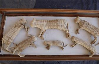 التصوير الشعاعي ثلاثي الأبعاد  يكشف أسرار المومياوات الحيوانية فى مصر القديمة