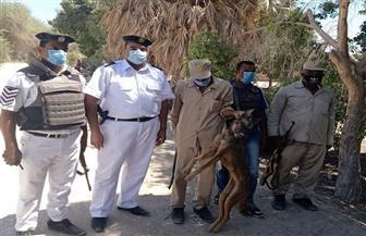 بعد استغاثة المواطنين.. قتل ذئب بقرية القرايا جنوب الأقصر   صور