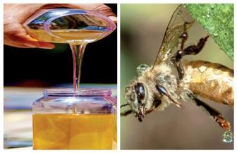 عسل النحل .. الفرحة من أول قطفة
