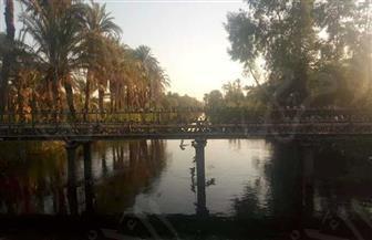 «الشادوف وبريمة أرشميدس والنطالة».. الري من نهر النيل على الطريقة المصرية   صور