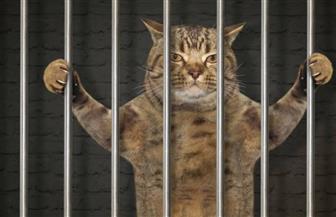 فرار قطة احتجزت في سجن في سريلانكا بعد تهريبها المخدرات