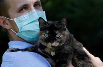 دراسة: الإنسان قد ينقل عدوى كورونا للقطط والكلاب