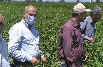 «الزراعة» تتابع ميدانيا المحاصيل الصيفية بالبحيرة