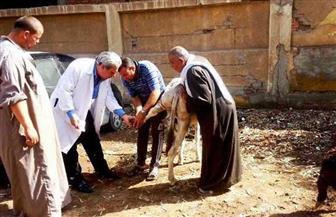 بيطري الشرقية: رش 140 ألفا وتجريع 38 ألف رأس ماشية لمكافحة الطفيليات | صور