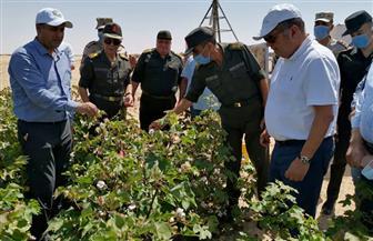 وزير قطاع الأعمال العام يتفقد تجربة زراعة القطن قصير التيلة بشرق العوينات | صور