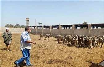 محافظ أسيوط: متابعة مستمرة لخطة تطوير مزارع الثروة الحيوانية وجولة لمزرعة بني سند | صور