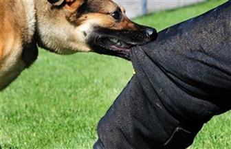كشف ملابسات مقطع فيديو لطالب يقوم بترويع آخر مستخدما الكلب