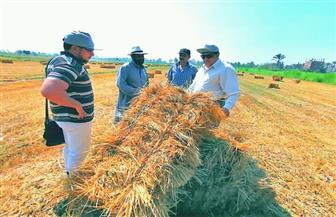 """""""زراعة دمياط"""": كبس وتدوير 4000 طن قش أرز بدمياط لصناعة أعلاف غير تقليدية   صور"""