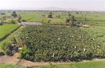 «التعاون الدولي» تطلق فيلم «ما وراء الغذاء» حول أنشطة برنامج الأغذية العالمي في مصر | فيديو