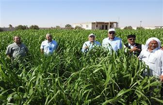 """منظمة"""" أكساد"""": تنفيذ العديد من المشروعات التنموية وحصاد مياه الأمطار بمطروح"""