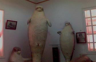 بعد واقعة نفوق عروس البحر.. تعرف على تاريخ تدوين الأسماك في أقدم محطة بالشرق الأوسط   صور