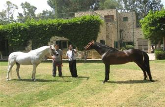 صلاح فتحي: «مزرعة الزهراء» بها أندر سلالات الخيول فى العالم