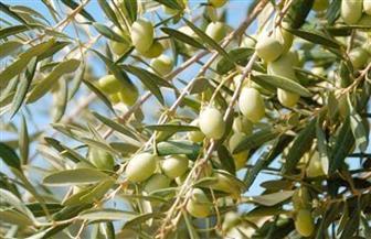 القصير يشكل لجنة لمعاينة مزارع الزيتون في وادي النطرون والعلمين