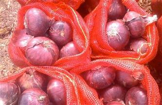«الزراعة» تعلن فتح السوق الإندونيسي أمام البصل المصري