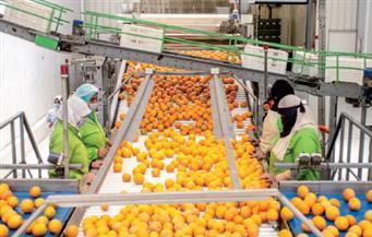 للعام الثانى على التوالى.. «البرتقال المصرى» يتصدر الأسواق العالمية