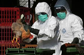 إنفلونزا الطيور تتفشى بصورة سريعة في الهند