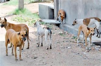 """غرفة عمليات وحملات لإبادة الكلاب الضالة.. """"الطب البيطري"""" في القاهرة تستعد لشهر رمضان"""