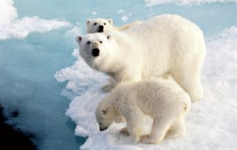 فى حالة زيادة درجة حرارته على  2 % كوكب الأرض يودع شكل الحياة كما نعرفها