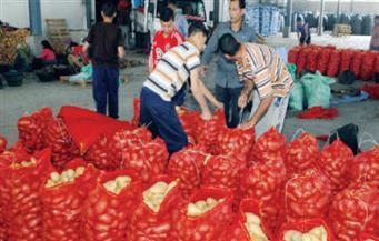 بالرغم من تداعيات كورونا.. الصادرات الزراعية.. قصة نجاح غير مسبوقة