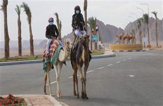 محافظة جنوب سيناء تنظم سباقا للهجن.. السبت المقبل | صور