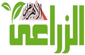 """""""الأهرام الزراعى"""" ترصد قصة نجاح الموالح المصرية وغزوها الأسواق العالمية"""