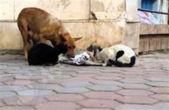 """""""المفوضين"""" توصي برفض دعوى منع قتل قطط وكلاب الشوارع"""