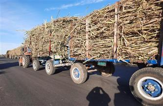لأول مرة بالصعيد.. نقل محصول قصب السكر بدون المراكب النيلية من خلال محور (قوص – نقادة)
