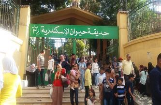 الشهامة القاتلة.. إصابة حارس بحديقة حيوان الإسكندرية أنقذ زائرًا من الأسود