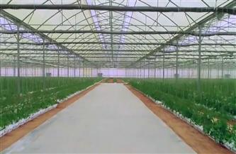 """""""زراعة الوادي الجديد"""": نستهدف جذب العمالة من مختلف المحافظات بمشروع الصوب الزراعية"""
