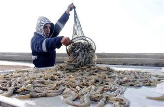 كيف تسهم مشروعات الدولة في تنمية الثروة السمكية ببورسعيد؟ | صور