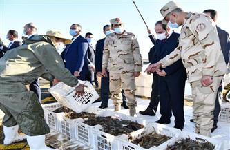 الرئيس السيسي يستمع لشرح تفصيلى حول مشروع الفيروز للاستزراع السمكى