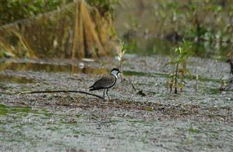وصول طيور مهاجرة جزر نهر النيل| صور