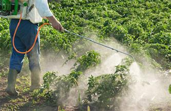 انطلاق حملة مكافحة القوارض لزراعات القمح في قنا