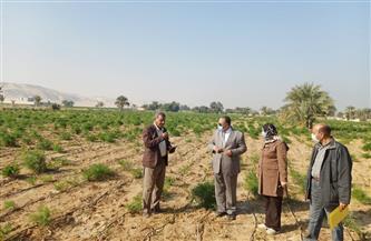 سكرتير مساعد أسيوط يترأس لجنة لتسعير أراضي أملاك الدولة بالقوصية   صور