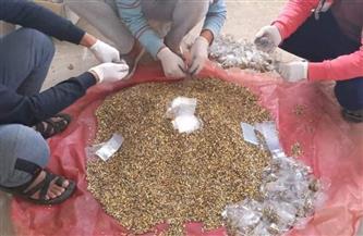 «الزراعة» تنفذ حملة مكافحة القوارض لحماية محصول القمح   صور