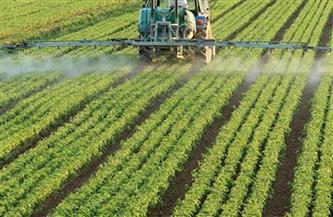 «الزراعة» تصدر توصيات فنية لمزارعي الأعلاف الخضراء الشتوية والصيفية