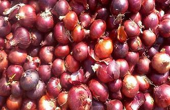 الزراعة تصدر توصيات فنية لمزارعي البصل لمراعاتها خلال شهر فبراير