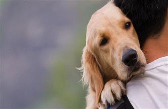 حاول صديقه قتله فأنقذته الكلاب.. تعرف على القصة الكاملة لواقعة ذبح طفل بالشرقية