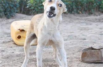 كلب ضال يعقر أبا ونجله بمدينة المطرية في الدقهلية