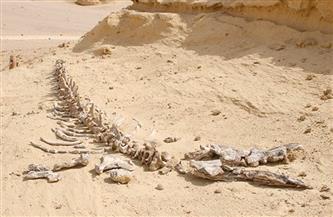 إشادات دولية بصون الطبيعة.. تعرف على أبرز إنجازات حماية التنوع البيولوجي في مصر