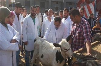 الكشف على 387 مواطنا و1397 حالة بيطرية بحلايب وأبو رماد