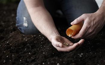 برنامج-التوفير-يقلل-فاتورة-استيراد-التقاوى-لـ--;الوطني-لإنتاج-البذور;-ينتصر-للمزارعين-ويضرب-المحتكرين