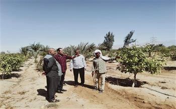 زراعة--فدانا-بطور-سيناء-بالأعلاف-التقليدية- -صور-