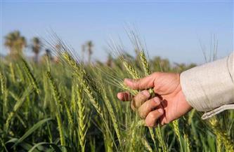 بعد إعلانها إستراتيجية التعافى والتوافق البيئى .. مصر «بوابة» الاقتصاد الأخضر