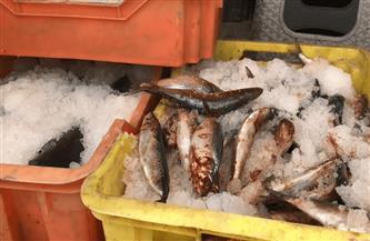 """ضبط 1.72 طن """"أسماك مجمدة"""" منتهية الصلاحية بمصنع لإنتاج السلع الغذائية بالشرقية"""