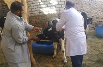 دعم حملات تحصين الثروة الحيوانية ضد الأمراض  بمطروح بنصف الثمن |صور